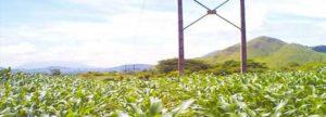 مبارزه با آفات گیاهان به وسیله امواج الکترومغناطیس